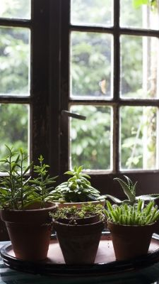 Here are Sabrina's tips on how to decorate with houseplants.