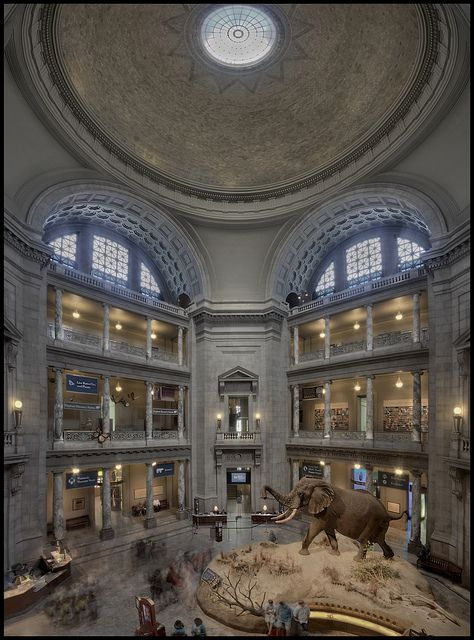 Smithsonian Museum of Natural History USA. One of my faves. I love all the DC museums.
