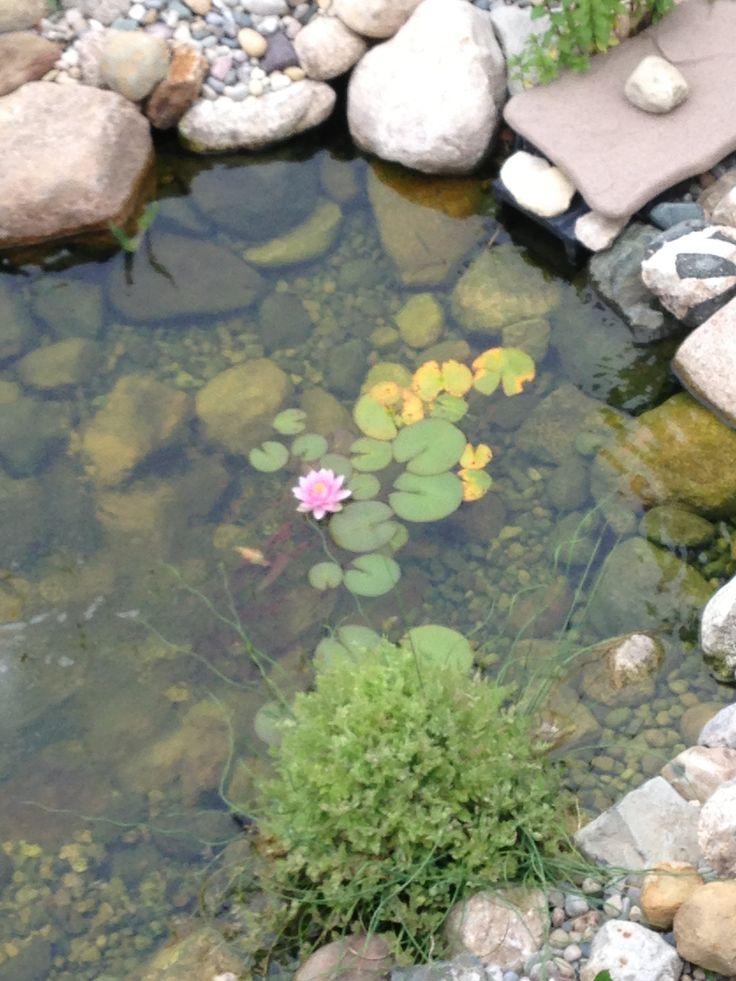 106 best koi ponds images on pinterest backyard ponds for Garden pond life