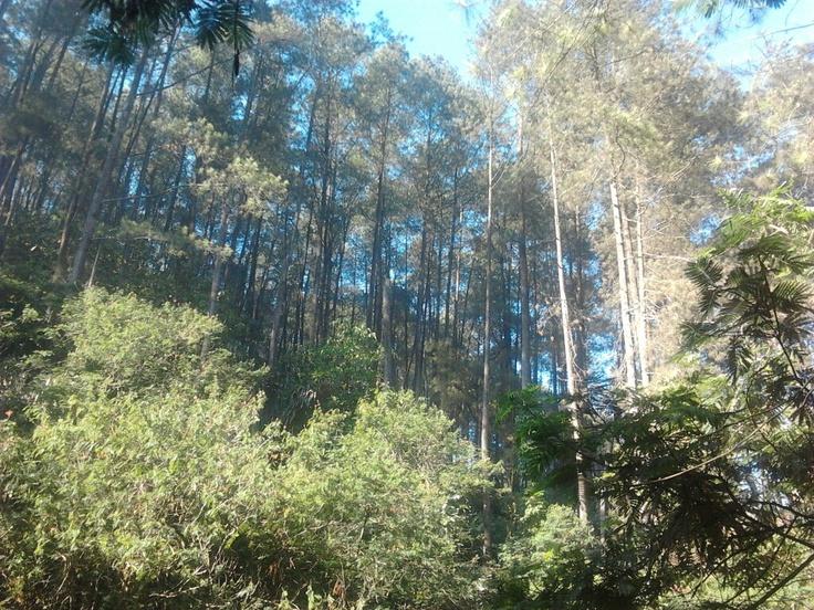 Morning Light and The Trees at Tahura Ir. H. Djuanda