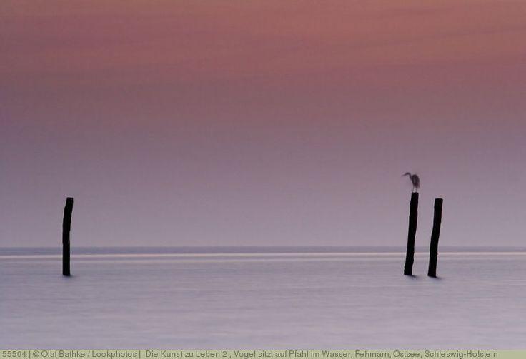 (Die Kunst zu Leben 2), Vogel sitzt auf Pfahl im Wasser, Fehmarn, Ostsee, Schleswig-Holstein