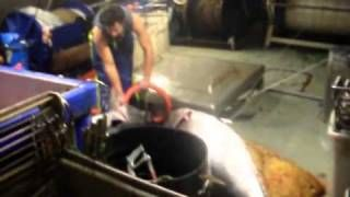 bluefin tuna new zealand  surface longline for southern bluefin tuna off east coast north island nz   http://gonefishinonline.co.nz/bluefin-tuna-new-zealand/