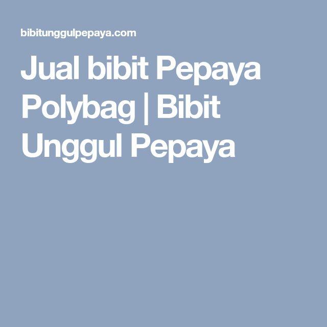 Jual bibit Pepaya Polybag   Bibit Unggul Pepaya