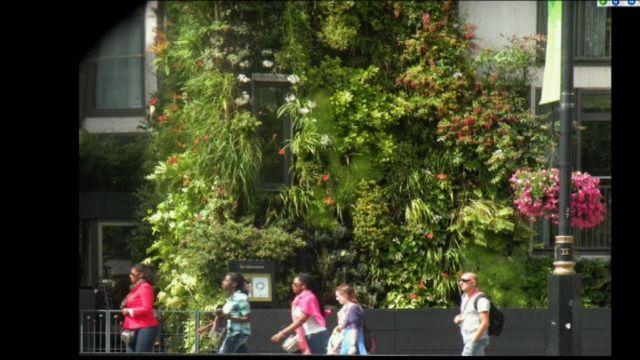 UR Samtiden - Odla i stan: Trädgård på höjden