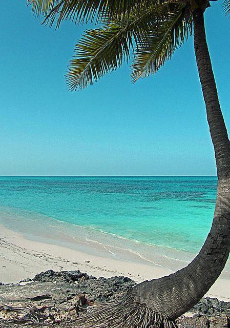 Bahamas: Exuma Beaches, Palms Trees Palmiers, Bahama Exuma, Bahamas Amazing, Palm Trees, Beautiful Palms, Trees Paradise, Bahamas I, Bahamas Lov