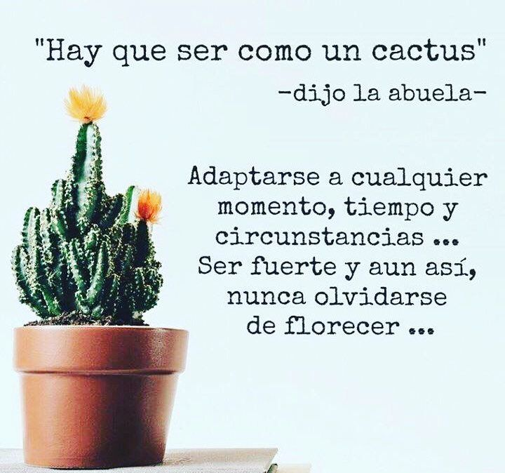 New Post Cactus Quotes Cactus Inspirational Phrases