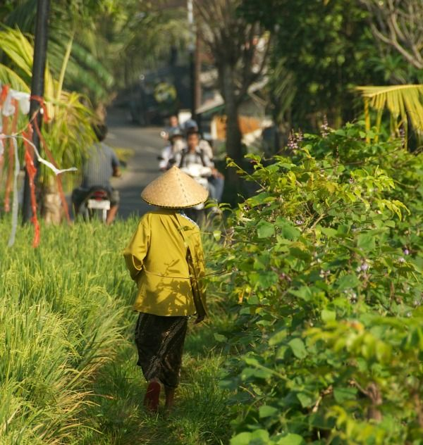 My Villas in Umalas | Enjoy the mix of urban and rural life that our area of Umalas offers: rice fields and trees on one side of the road. #Bali #holiday #villas #rental