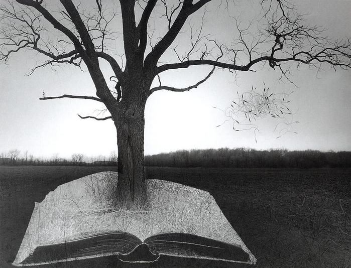 a biography of jerry uelsmann an american photographer and founder of photomontage Jerry uelsmann คือเจ้าพ่อแห่ง photomontage หรือการอัดขยายภาพด้วย negative หลายๆรูป .