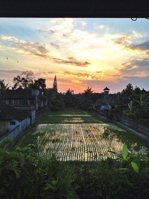 Ubud, Bali #Ubud #Bali