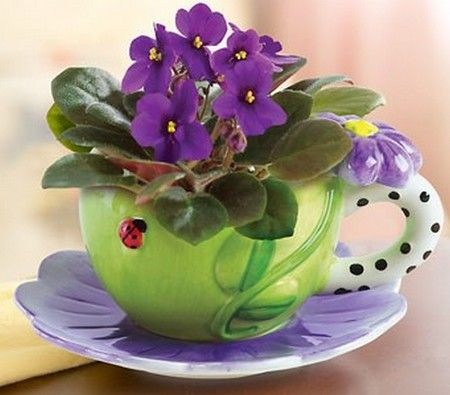 ~♥ violets in whimsical cup~...my cousins gave me this when I was in the hospital. I still have the cup and saucer, but killed the plant fairly quickly.