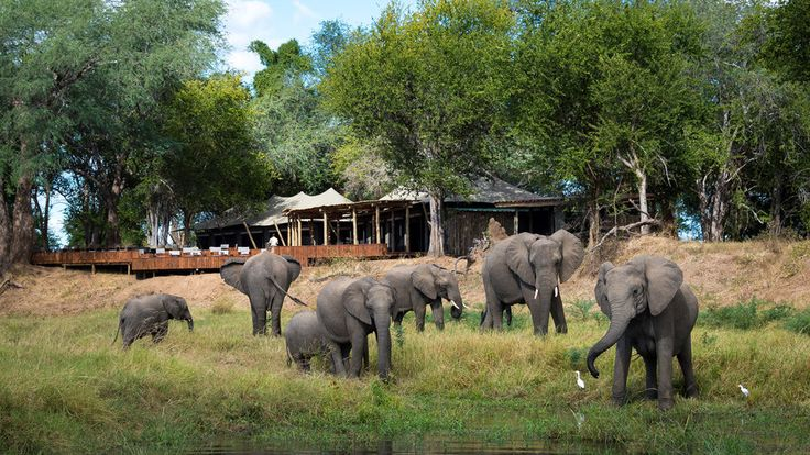 Ruckomechi Camp, Zimbabwe | Food & Wine goes way beyond mere eating and drinking. We're on a mission to find the most exciting places, new experiences, emerging trends and sensations.
