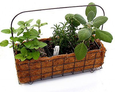 Wire Herb Growing Basket