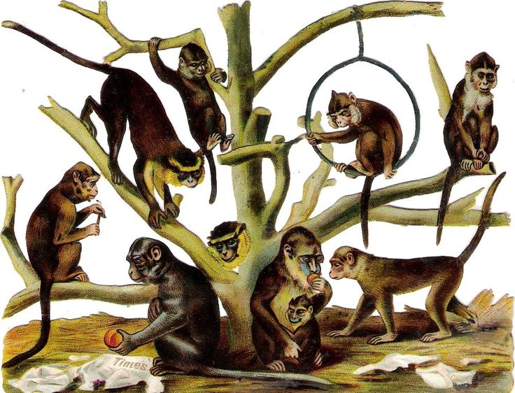 Oblaten Glanzbild scrap die cut chromo Affe monkey 16cm singe Times news