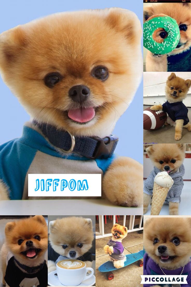 My animal edit number 2 A very special doggie named Jiffpom