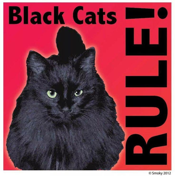Nuff said!! Black cat memes, Black cat, Cat adoption