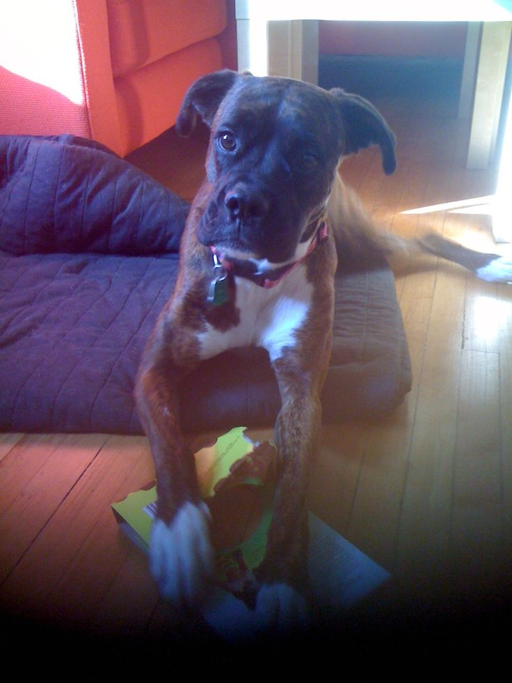 """""""Who me? I wasn't chewing this box between my paws... no."""""""