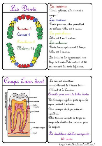 Cartes des dents