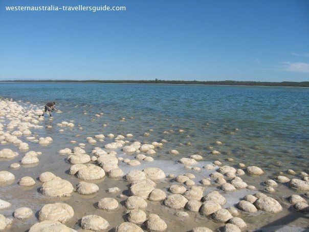 The Lake Clifton #Thrombolites south of #Mandurah, Western Australia
