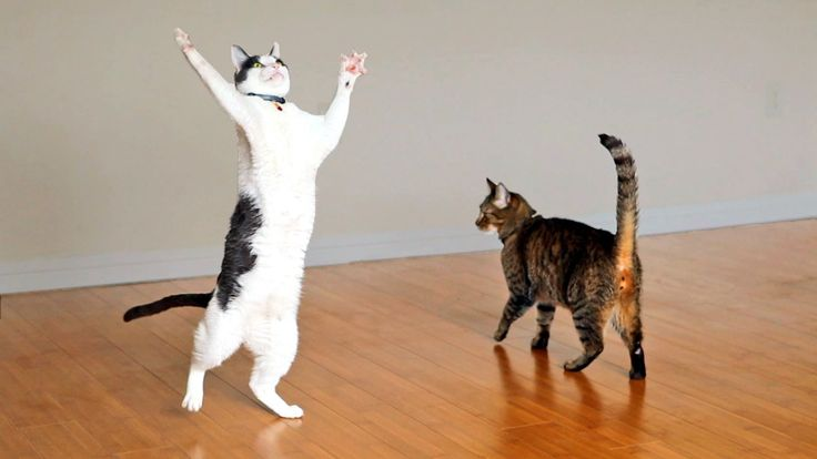 Two Incredibly Excited Cats Play With a Strand of Yarn Attached to a Spinning Ceiling Fan