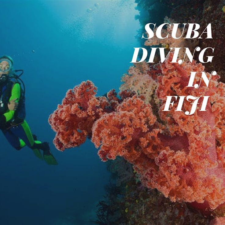 Ready to explore the #amazing  #underwater  life via #scuba  #diving  and other #water  #activities  in Fiji offered by #paradise  Taveuni. #vacation #holidays #cheap #price #fijiairways