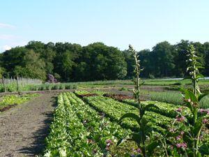 Land en Boschzigt | Biologisch Dichtbij