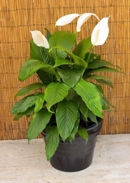 1000 ideas about indoor house plants on pinterest house for Easy to grow indoor plants