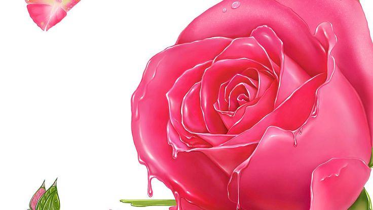 Pink Roses 2 - http://1080wallpaper.net/pink-roses-2.html