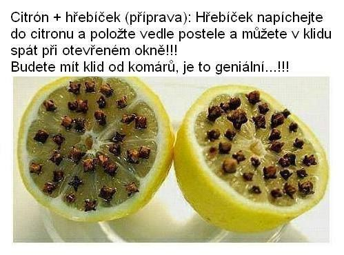 citron.jpg (499×370)