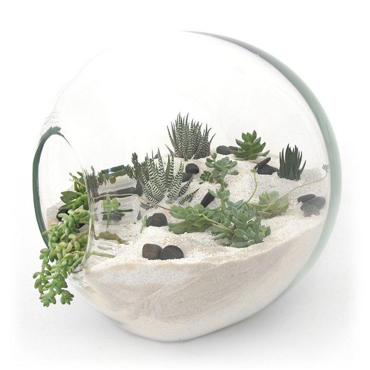 Minijardim com suculentas. DIY - Faça você mesmo  Como fazer Terrários e Mini Jardins