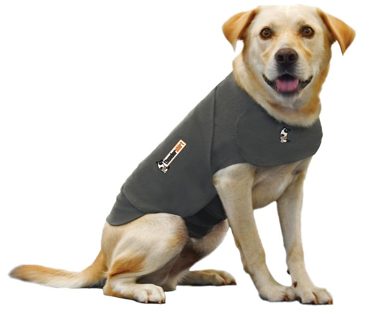 Thunder Shirts For Dogs