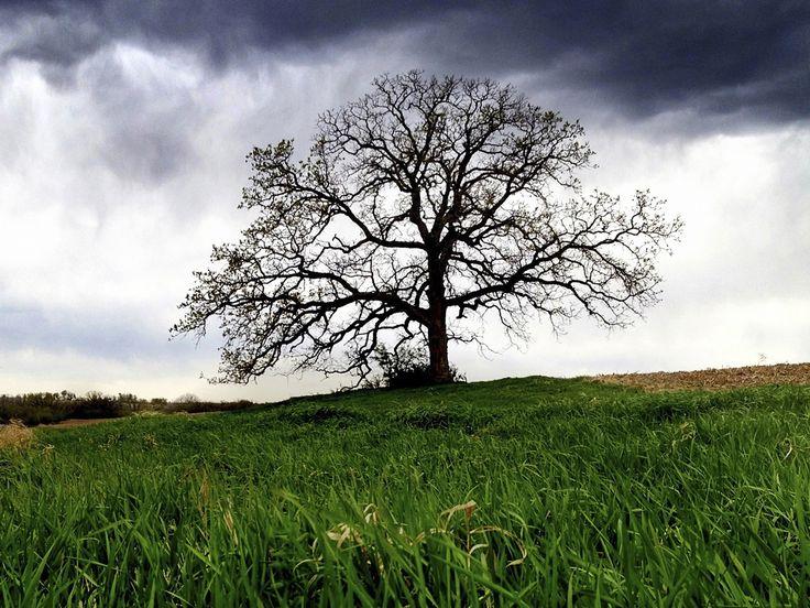 "Mark Hirsch photographs ""That Tree"" Written by CBSNews.com senior producer David Morgan"