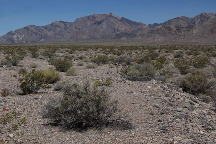 How to survive a day at Death Valley