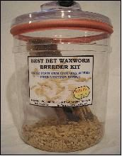Best Bet Waxworm & Mealworm Breeder Kits. The birds love them. Also, check out http://bitemewaxworms.com/ to buy the worms.