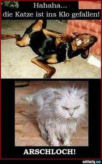 Wenn die Katze zu weit nach Klopapier greift...