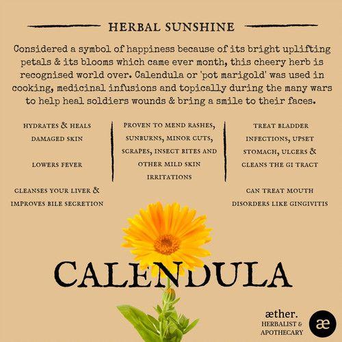 Calendula Benefits Herbal Medicine Apothecary Plant Medicine Herbal Healing Herbalism Herbal Tinctures