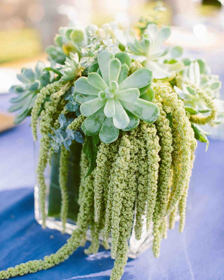 The ever-trendy accent can be used in so many different ways, from boutonnieres to centerpieces and more! Get inspired by these succulent accents from real weddings.