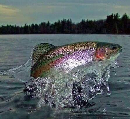 Rainbow Splash. When Turbo Charged Reading you 'feel' the text http://youtu.be/Qlf74Lr_xbQ