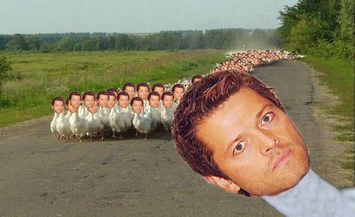 Herd of Castiel Ducks