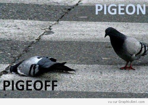 Jeu de mot et comparaison entre un interrupteur et des pigeons, l'un d'entre eux à de la lumière au plafond, l'autre non :-)