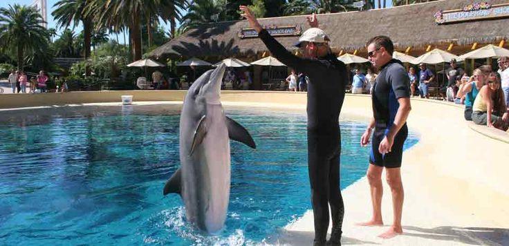 Siegfried and Roy's Secret Garden and Dolphin Habitat - Times, Deals & Reviews | Vegas.com