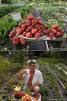 Такие результаты вам и не снились!)))) Золотая мечта каждого садовода!.