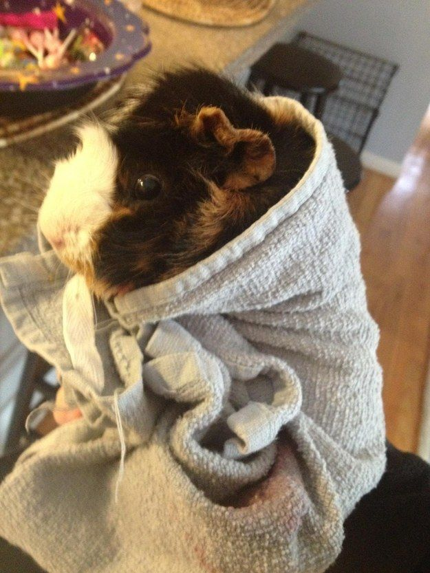 �What? I�m still technically a type of pig in a blanket.� | 9 Scrumptious Piggies In A Blanket
