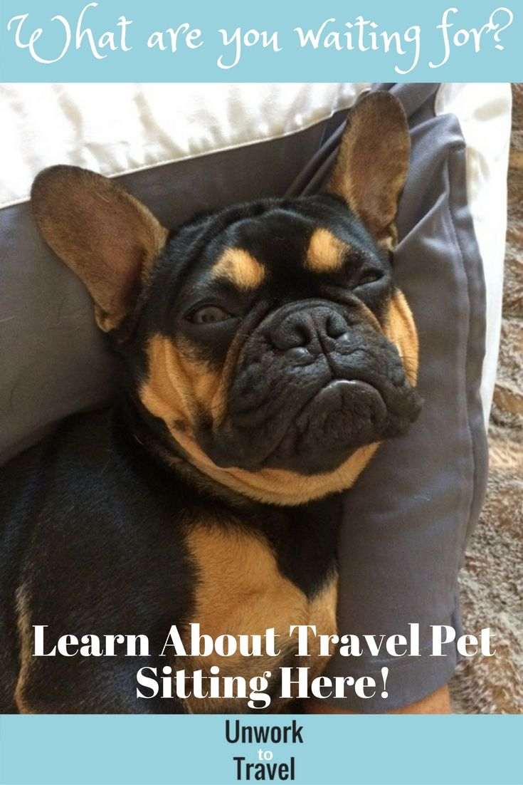 Do you love animals? Learn about our experience pet sitting and how you can use pet sitting jobs to travel!