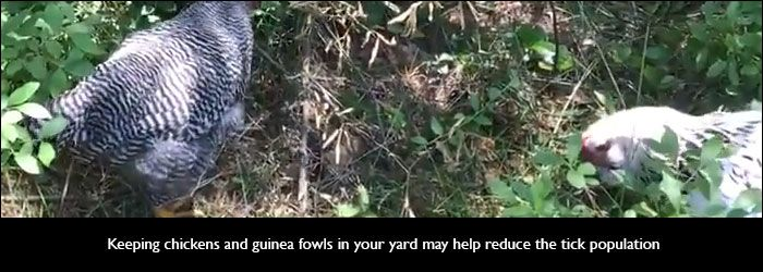 4 Natural Remedies to Get Rid of Ticks in the Yard | Get ...