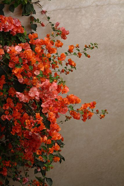 I think these are the prettiest colors for flowers. | Flickr - Photo Sharing!