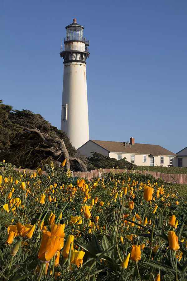 Pigeon Point Lighthouse And California Poppies Photograph