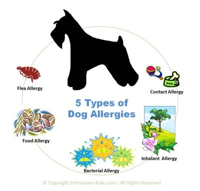 Dog Allergies, 5 Types of Dog Allergies, Symptoms, & Treatments #dogs
