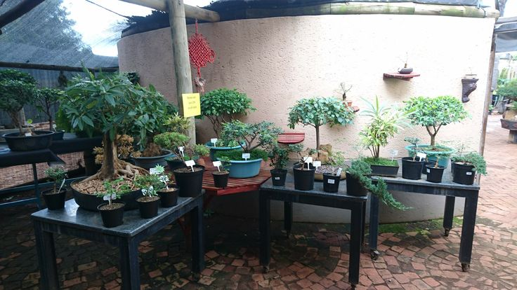 Choose your plant and pot and make your own creation (assistance is available)