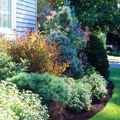 Because they keep their foliage all winter, low-growing evergreens are perfect for planting around your foundation to hide it all year. Test Garden Tip: Make a bold statement by selecting varieties that offer different shapes and colors, but stay compact so they don't outgrow their space. 'Blue Shag' white pine, 'Montgomery' blue spruce, and 'Silver Whispers' Swiss stone pine are smaller selections that combine beautifully with 'Profusion White' zinnia, for example./
