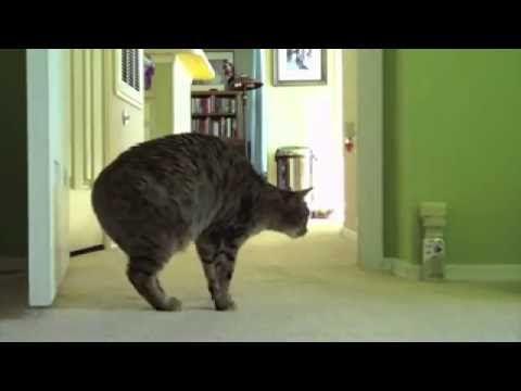 Отпугиватель кошек - YouTube